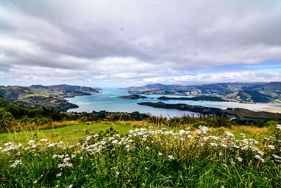 Lyttleton Harbor, Banks Peninsula