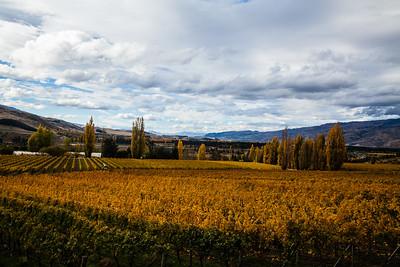 Vines in New Zealand's Central Otago wine region