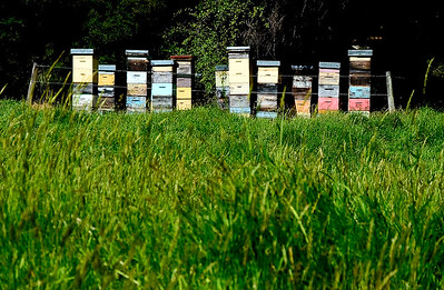 Beehives- Little River, New Zealand