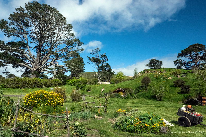 New Zealand-04514