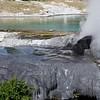 Rotorua Te Puia Geothermal Geyser