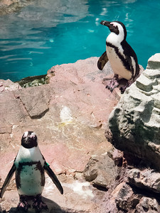 Penguins: The Clowns of the Aquarium
