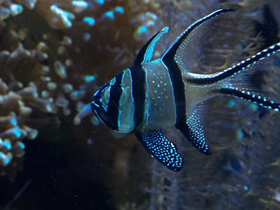 Angel Fish?