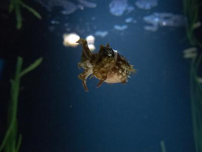 Tiny Crawfish