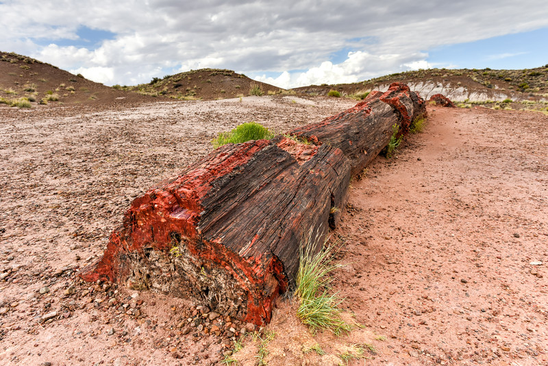 Jasper Forest - Petrified Forest National Park
