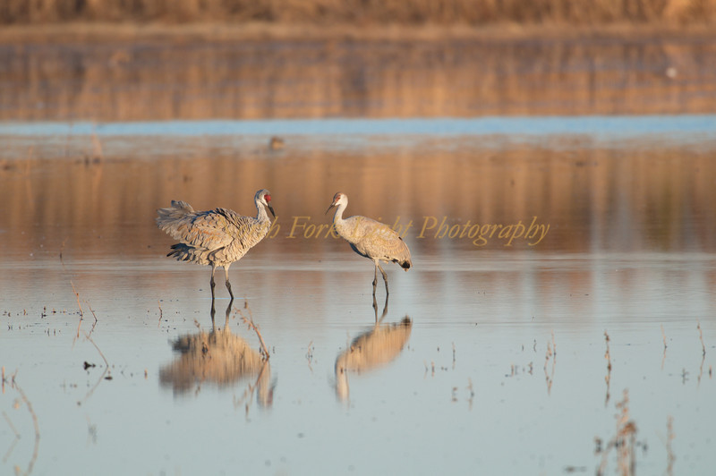 17,000 sandhill cranes also show up.