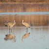 17,000 sandhill cranes also show up.