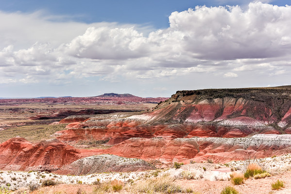 Whipple Point - Petrified Forest National Park