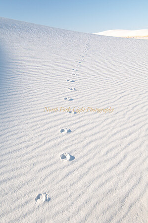 Signs of life in barren landscape. White Sands National Monument, Windblown gypsum drifts shape the landscape.