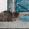 "<span id=""title"">Asleep on the Job</span> <em>New Orleans</em> This cat was on the porch of the house from the previous photo. As soon as it woke up and saw me it ran down for some handouts. I did not oblige, but it was nice to see a friendly cat."
