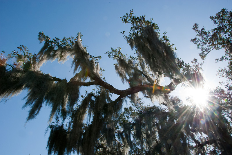 "<span id=""title"">Spanish Moss</span> <em>Audubon Park</em> A few select trees in Audubon Park were just covered in moss."
