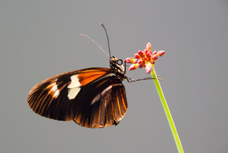 """<span id=""""title"""">Butterfly</span> <em>Audubon Insectarium</em> The best part about the insectarium is a walk-in butterfly exhibit where hundreds of them fly around and hang out."""