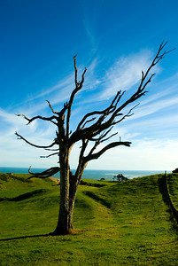 A wind swept tree and clouds on New Zealands West Coast