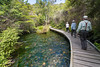 "The bush walk around Te Waikoropupu Springs, or locally called ""Pupu Spring"", near Takaka in Golden Bay, December 2016. [Te Waikoropupu Springs 2016-12 011 GoldenBay-NZ]"