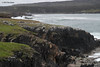 Elliston, NL Puffin Site looking back at our campsite.