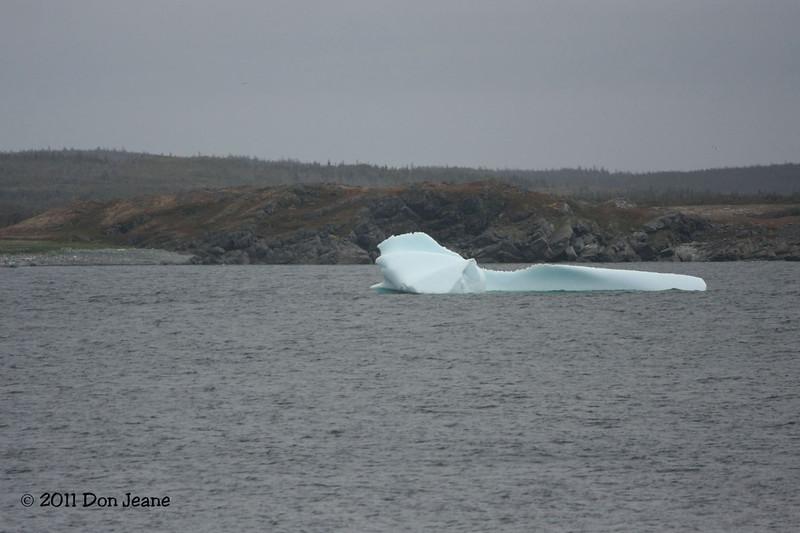 Iceberg, Ship Cove, NL.