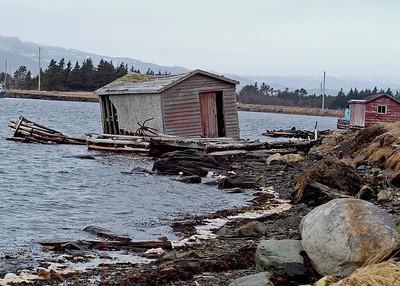Newfoundland 5002