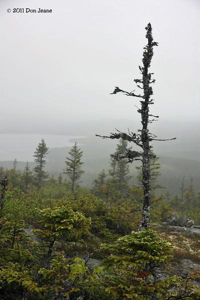 Louil Hills trail, Terra Nova Natl Park.