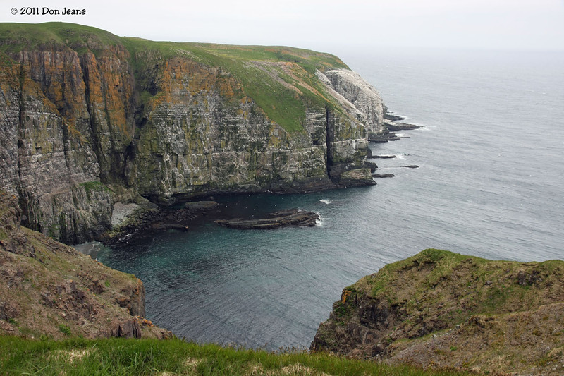 Cape St Mary's Ecological Reserve, St Brides, NL.