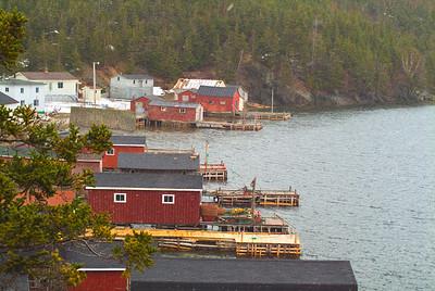 Newfoundland 5009