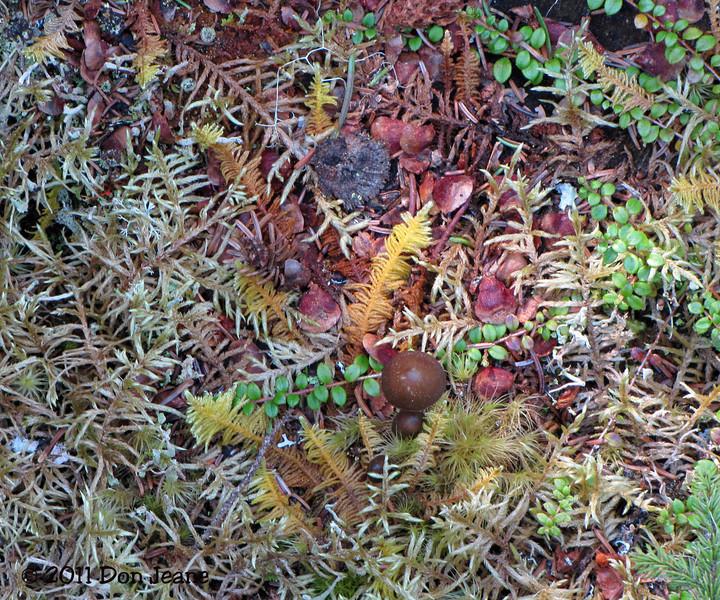 Hiking Trail, Dildo Run Prov Park, New World Island, NL.
