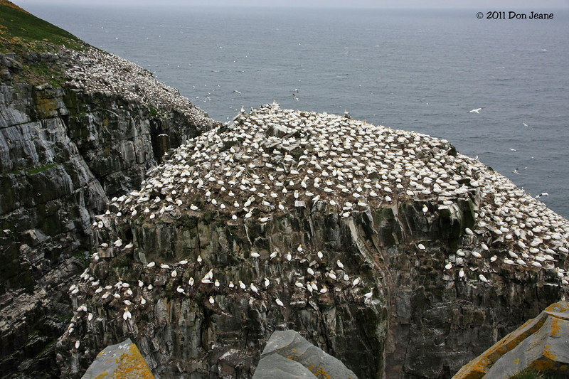 Gannet site, St Mary's Ecological Reserve.