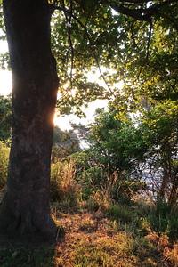 Cliff Walk trees