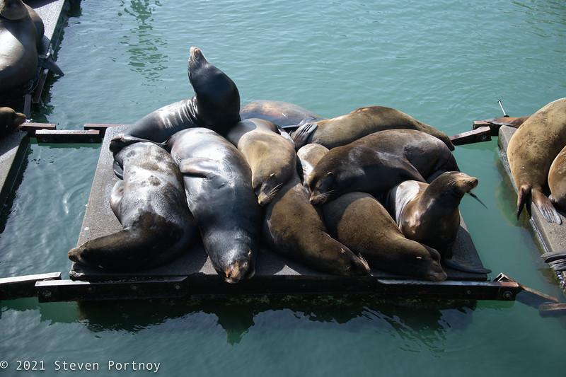 Newport Sea Lion Docks