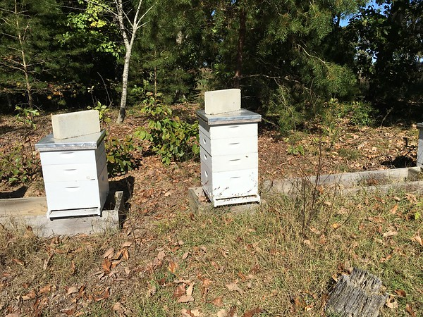 Busy hive on the right