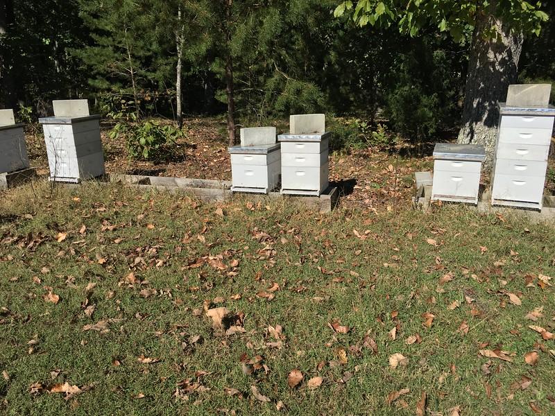 A bee farmer, too!
