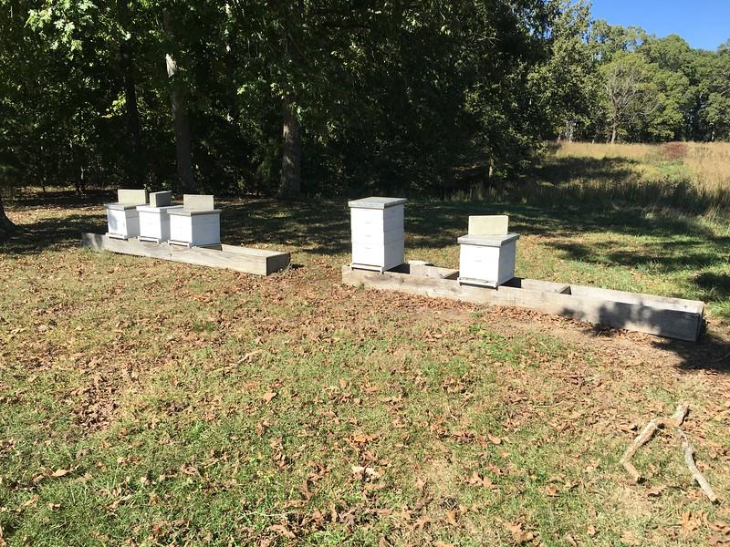 Farm full o'bees