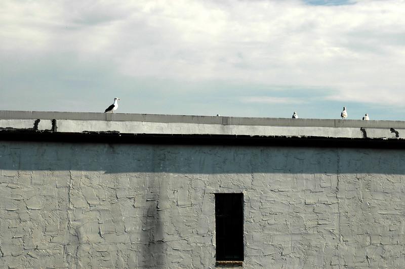 Gulls watching us.