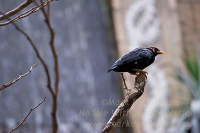 Bird Kingdom in Niagara Falls, Canada.