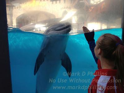 Eliza Phillips at Marineland in Niagara Falls, Canada, with dolphin at Waldorf Stadium