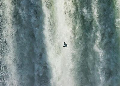 Seagull flying thru