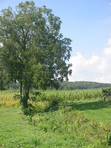 Daniel Lenko's farm