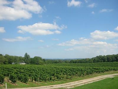 View from Vineland Estates