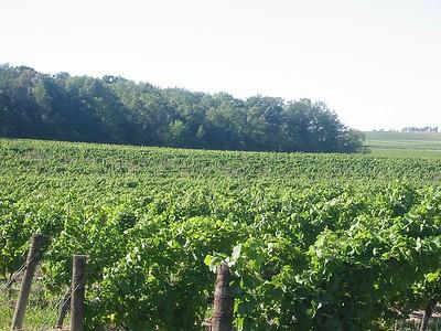 Vineland Estates vineyard