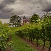 The Vineyards at Peninsula Ridge