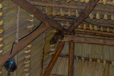 Bats in the eves of my house.