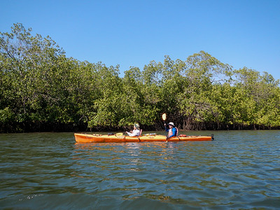 Kayaking in the Mangrove Estuaries.