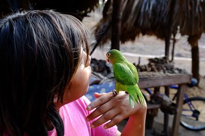 Friendly parrot.