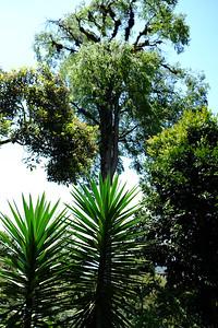 Selva Negra Nature Reserve - Jinotega, Nicaragua.