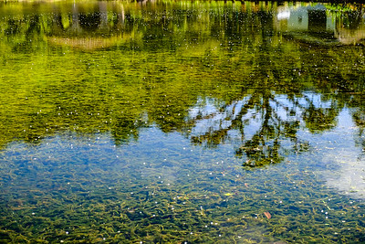 Green reflections.