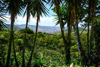 View over coffee trees to Matagalpa.