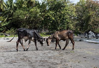 20150314-Nicaragua-810_0847