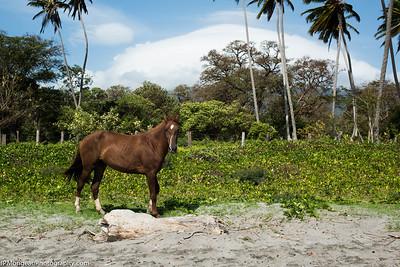 20150313-Nicaragua-810_0766