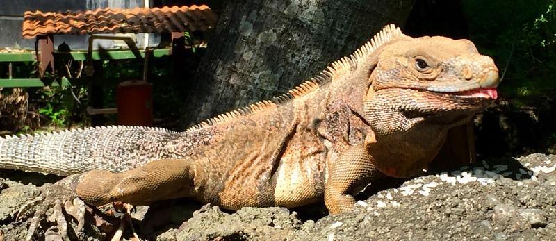 Nicaraguan wildlife
