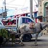 Horse cart near Granada market