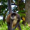 Las Isletas - monkey